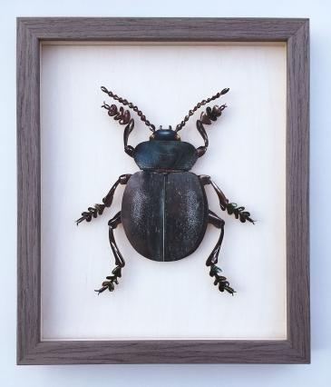 Hybrid Gallery Marian Hill  Bloody Nosed Beetle